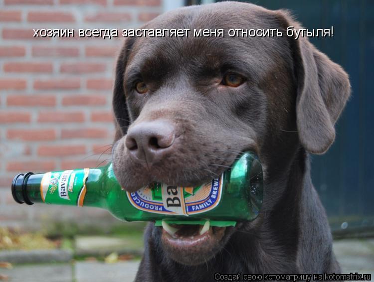Котоматрица: хозяин всегда заставляет меня относить бутыля!