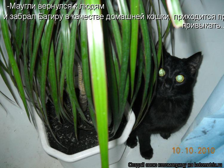 Котоматрица: -Маугли вернулся к людям и забрал Багиру в качестве домашней кошки, приходится привыкать... привыкать...