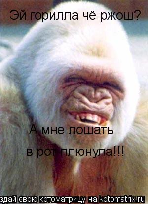 Котоматрица: Эй горилла чё ржош? А мне лошать  в рот плюнула!!!