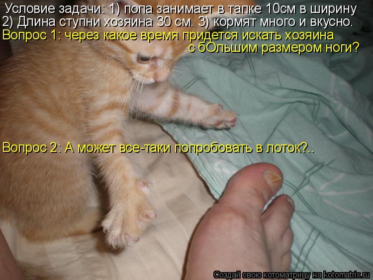 Котоматрица: Условие задачи: 1) попа занимает в тапке 10см в ширину 2) Длина ступни хозяина 30 см. 3) кормят много и вкусно. Вопрос 1: через какое время придется