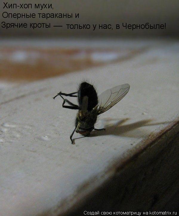 Котоматрица: Хип-хоп мухи, __ только у нас, в Чернобыле! Зрячие кроты Оперные тараканы и