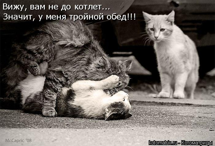 Котоматрица: Вижу, вам не до котлет... Значит, у меня тройной обед!!!