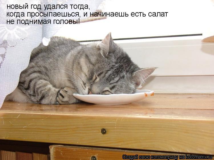 Котоматрица: новый год удался тогда, когда просыпаешься, и начинаешь есть салат  не поднимая головы!