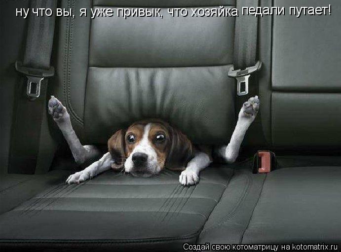 Котоматрица - ну что вы, я уже привык, что хозяйка педали путает!