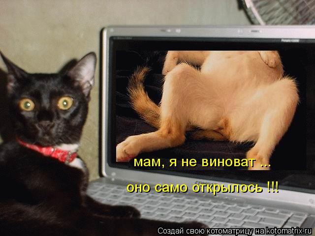 Котоматрица: мам, я не виноват ... оно само открылось !!!
