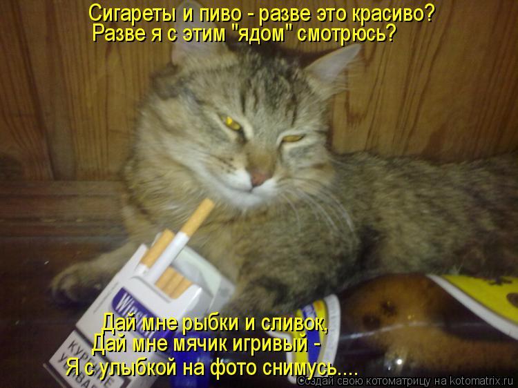 """Котоматрица: Сигареты и пиво - разве это красиво? Разве я с этим """"ядом"""" смотрюсь? Дай мне рыбки и сливок, Дай мне мячик игривый -  Я с улыбкой на фото снимусь."""