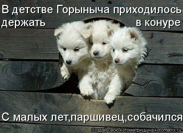 Котоматрица: С малых лет,паршивец,собачился ! В детстве Горыныча приходилось держать                            в конуре