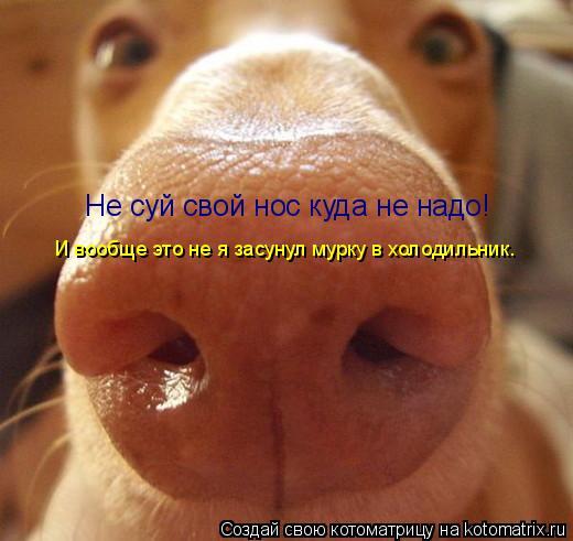 Котоматрица: Не суй свой нос куда не надо!  И вообще это не я засунул мурку в холодильник.