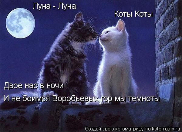 Котоматрица: Луна - Луна Коты Коты Двое нас в ночи И не боимся Воробьевых гор мы темноты