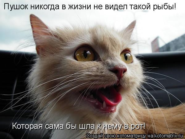 Котоматрица: Пушок никогда в жизни не видел такой рыбы! Которая сама бы шла к нему в рот!