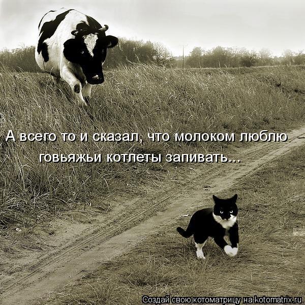 Котоматрица: А всего то и сказал, что молоком люблю  говьяжьи котлеты запивать...
