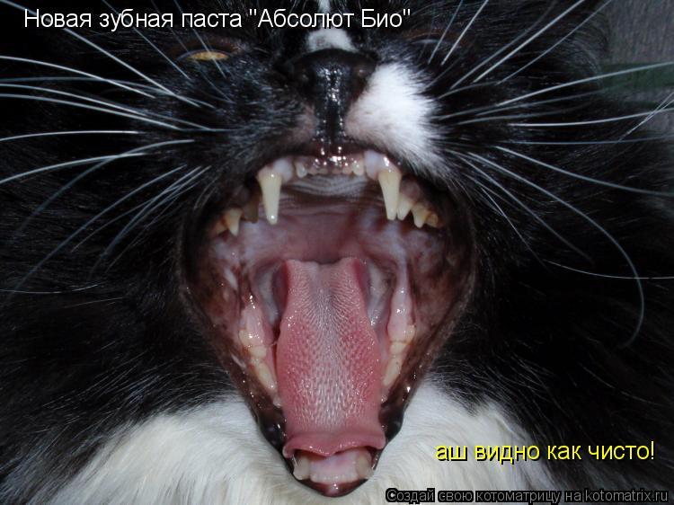 """Котоматрица: Новая зубная паста """"Абсолют Био"""" аш видно как чисто!"""