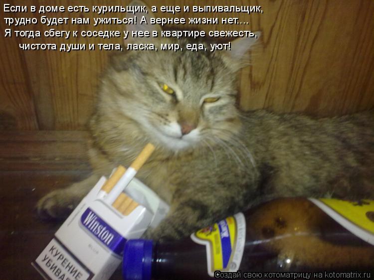 Котоматрица: Если в доме есть курильщик, а еще и выпивальщик, трудно будет нам ужиться! А вернее жизни нет.... Я тогда сбегу к соседке у нее в квартире свеже