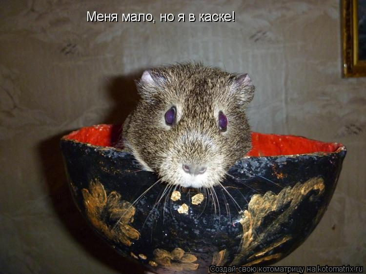 Котоматрица: Меня мало, но я в каске!