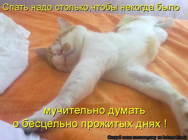 Котоматрица: мучительно думать  о бесцельно прожитых днях ! Спать надо столько,чтобы некогда было