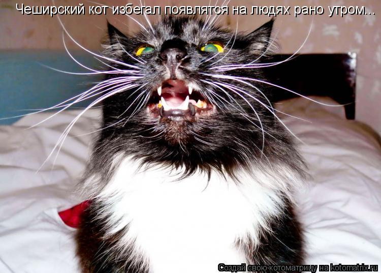 Котоматрица: Чеширский кот избегал появлятся на людях рано утром...