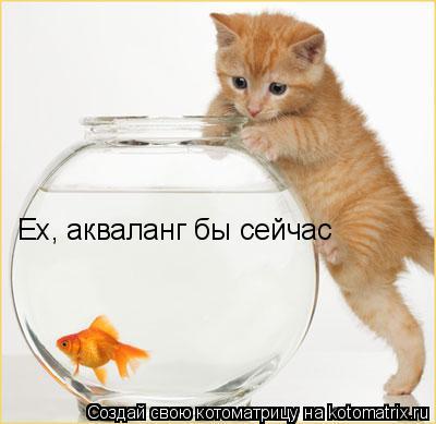 Котоматрица: Ех, акваланг бы сейчас