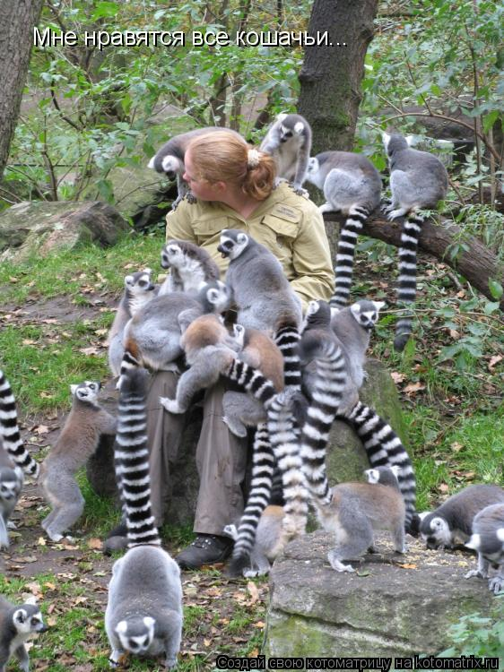 Котоматрица: Мне нравятся все кошачьи...