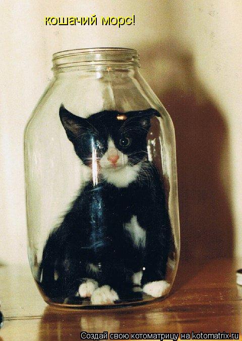Котоматрица: кошачий морс!