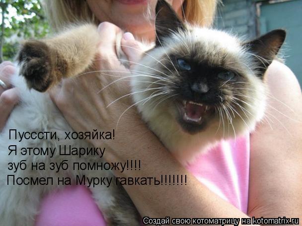 Котоматрица: Пусссти, хозяйка! Я этому Шарику зуб на зуб помножу!!!! Посмел на Мурку гавкать!!!!!!!