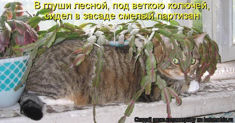Котоматрица: В глуши лесной, под веткою колючей, сидел в засаде смелый партизан