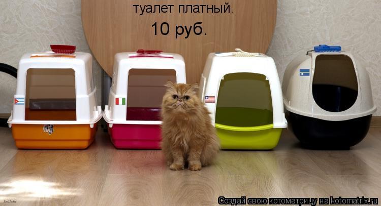 Котоматрица: туалет платный. 10 руб.
