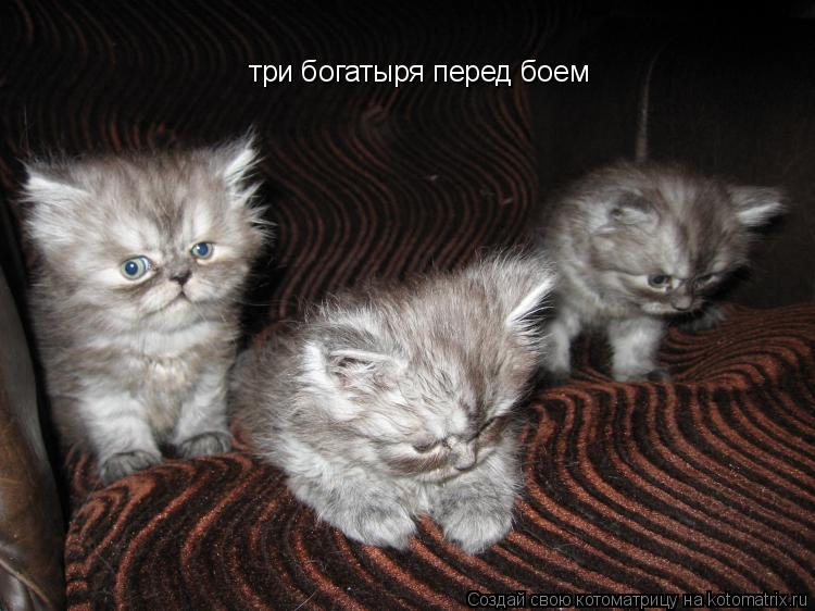 Котоматрица: три богатыря перед боем