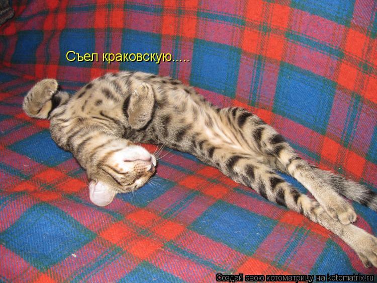 Котоматрица: Съел краковскую.....