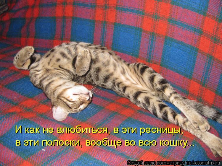 Котоматрица - И как не влюбиться, в эти ресницы, в эти полоски, вообще во всю кошку.