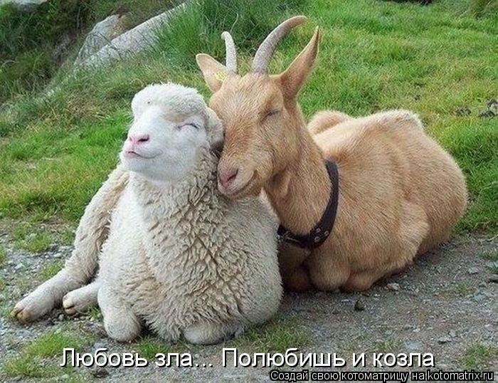 Котоматрица: Любовь зла... Полюбишь и козла