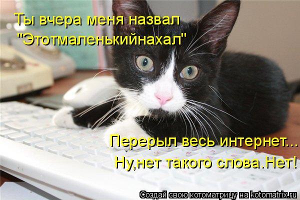 """Котоматрица: Ты вчера меня назвал """"Этотмаленькийнахал"""" Перерыл весь интернет... Ну,нет такого слова.Нет!"""