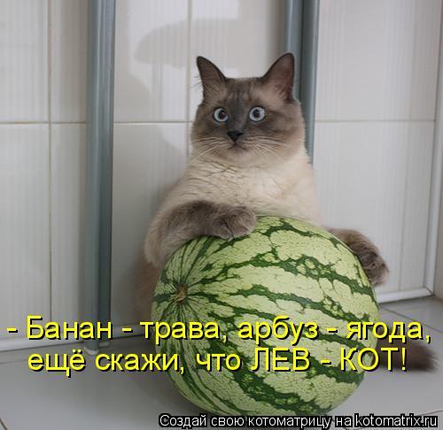 Котоматрица: - Банан - трава, арбуз - ягода, ещё скажи, что ЛЕВ - КОТ!