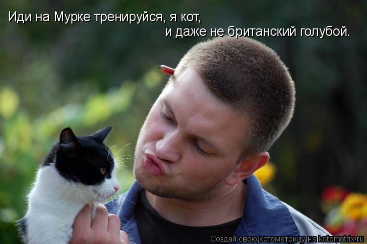 Котоматрица: Иди на Мурке тренируйся, я кот,  и даже не британский голубой.