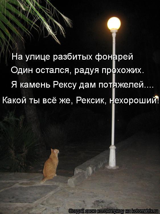 Котоматрица: На улице разбитых фонарей Один остался, радуя прохожих. Я камень Рексу дам потяжелей.... Какой ты всё же, Рексик, нехороший!