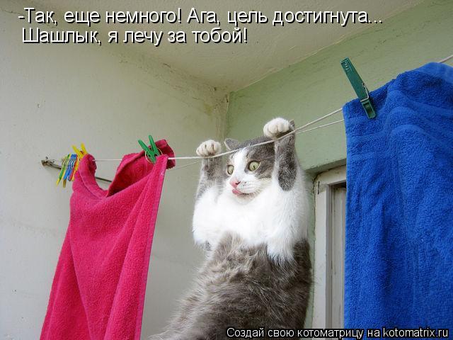 Котоматрица: -Так, еще немного! Ага, цель достигнута... Шашлык, я лечу за тобой!