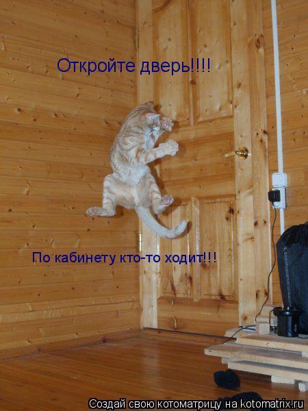 Котоматрица: Откройте дверь!!!! По кабинету кто-то ходит!!!
