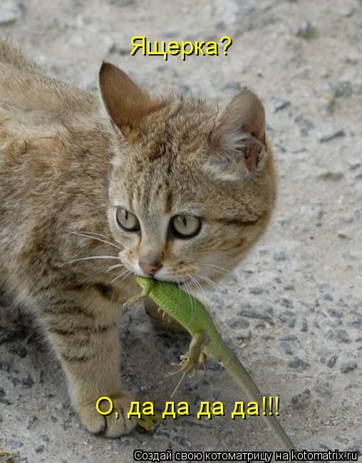 Котоматрица: Ящерка? О, да да да да!!!