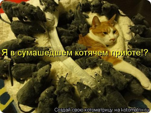 Котоматрица: Я в сумашедшем котячем приюте!?