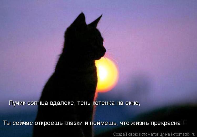 Котоматрица: Лучик солнца вдалеке, тень котенка на окне, Ты сейчас откроешь глазки и поймешь, что жизнь прекрасна!!!