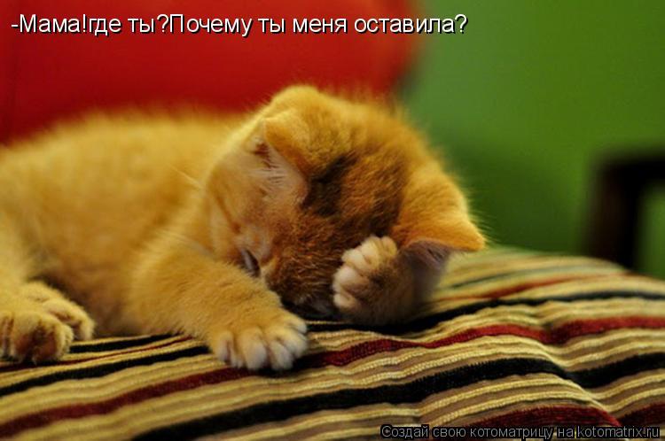 Котоматрица: -Мама!где ты?Почему ты меня оставила?