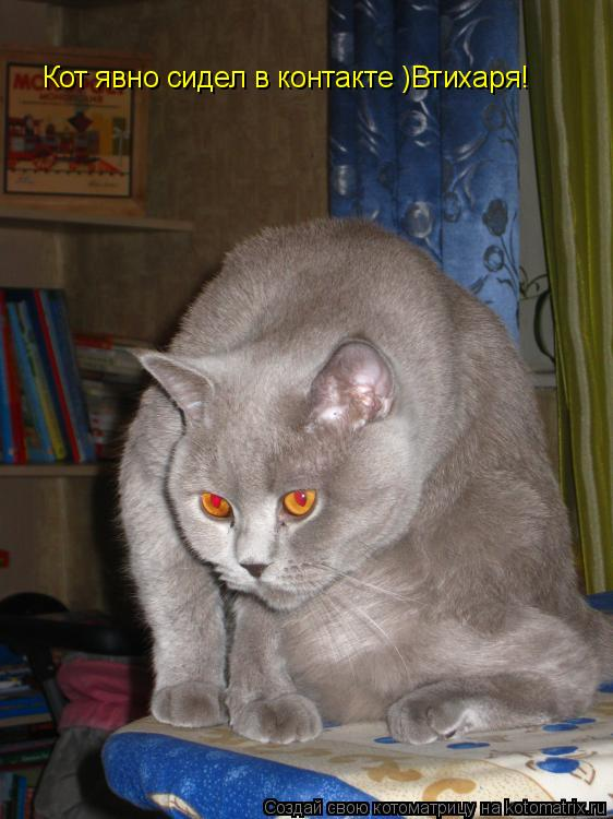 Котоматрица: Красные глаза умераю ,упеваю Кот явно сидел в контакте )Втихаря!