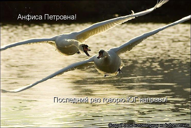 Котоматрица: Последний раз говорю:ЮГ направо! Анфиса Петровна!