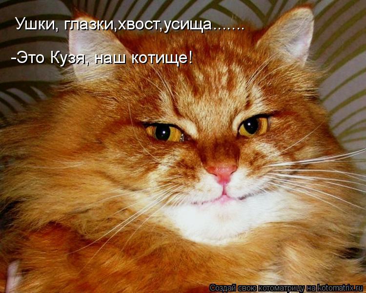 Котоматрица: Ушки, глазки,хвост,усища....... -Это Кузя, наш котище!