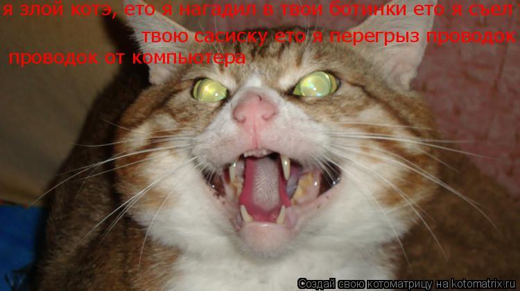 Котоматрица: я злой котэ, ето я нагадил в твои ботинки ето я съел твою сасиску ето я перегрыз проводок от компьютера  твою сасиску ето я перегрыз проводок