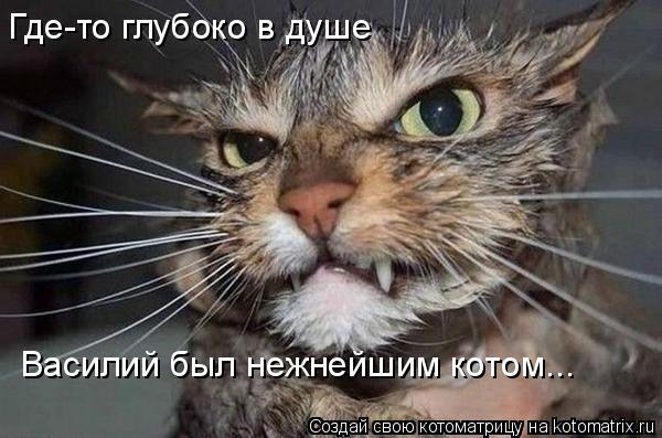 Котоматрица: Где-то глубоко в душе  Василий был нежнейшим котом...