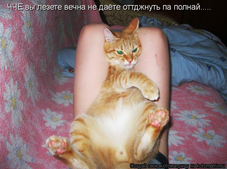 Котоматрица: ЧЧЕ вы лезете вечна не даёте оттджнуть па полнай.....