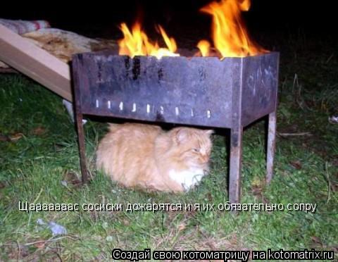 Котоматрица: Щааааааас сосиски дожарятся и я их обязательно сопру