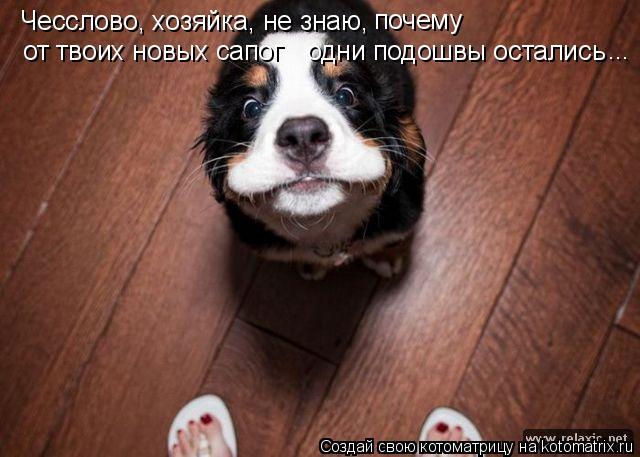 Котоматрица: Чесслово, хозяйка, не знаю,  почему от твоих новых сапог одни подошвы остались ...