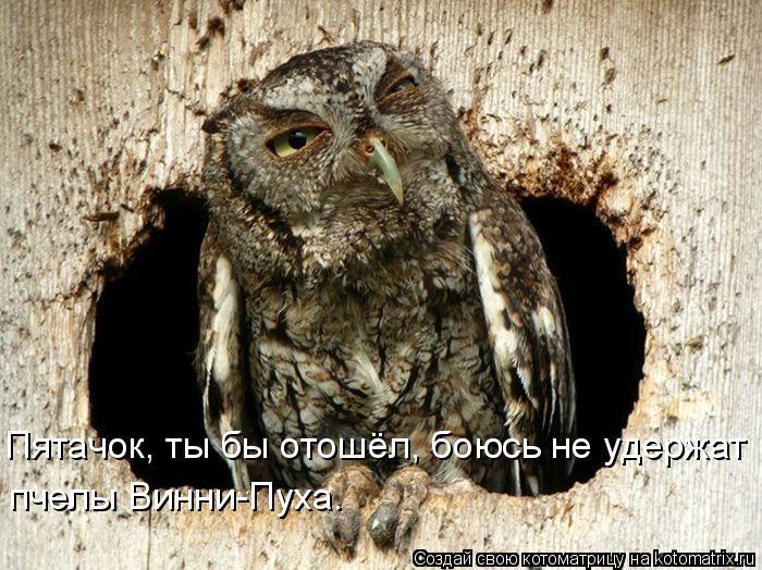 Котоматрица: Пятачок, ты бы отошёл, боюсь не удержат пчелы Винни-Пуха.
