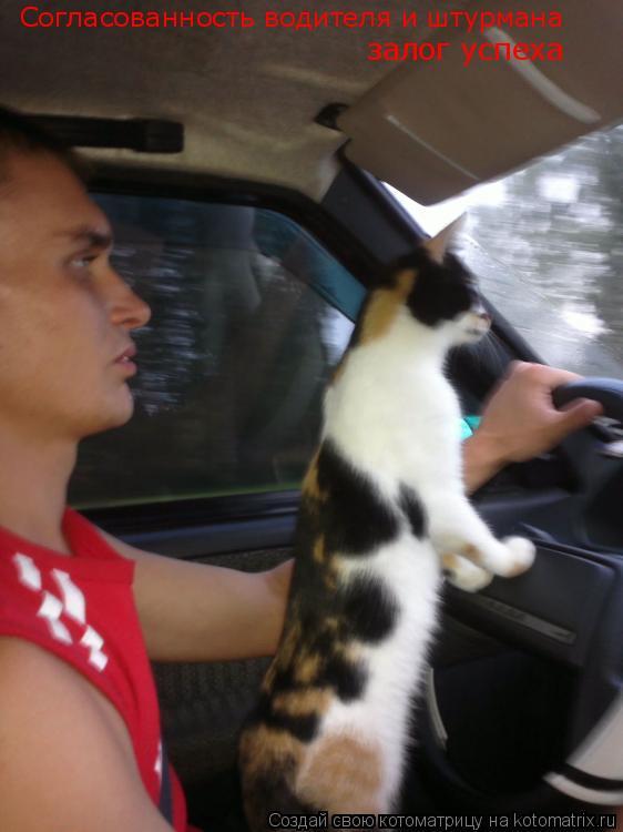 Котоматрица: Согласованность водителя и штурмана залог успеха